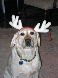 Lucky Reindeer